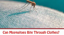 Can Mosquitoes Bite Through Clothes?