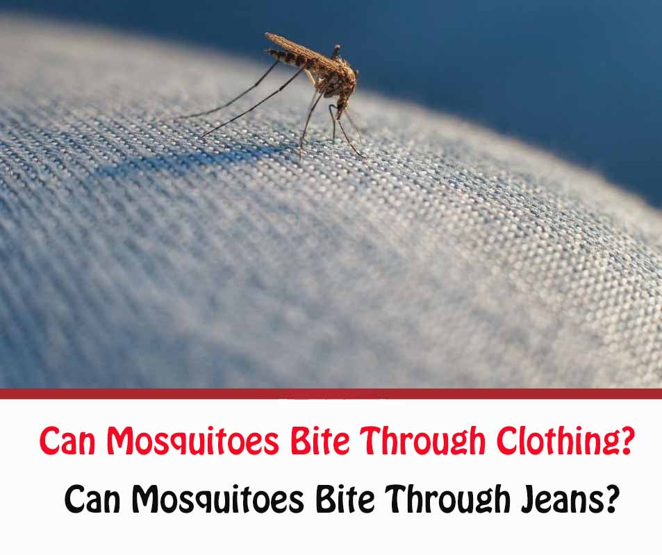 Can Mosquitoes Bite Through Jeans?