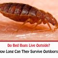 Do Bed Bugs Live Outside