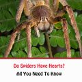 Do Spiders Have Hearts