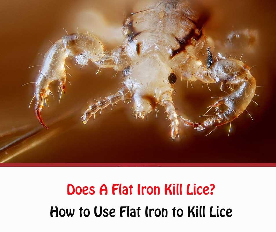 Does A Flat Iron Kill Lice?