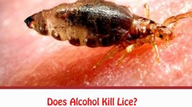 Does Alcohol Kill Lice?