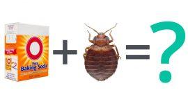 Does Baking Soda Kill Bed Bugs?