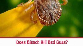Does Bleach Kill Bed Bugs?