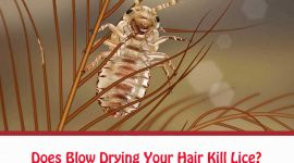 Does Blow Drying Your Hair Kill Lice?