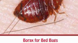 Does Borax Kill Bed Bugs?