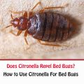 Does Citronella Repel Bed Bugs