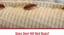 Does Deet Kill Bed Bugs?