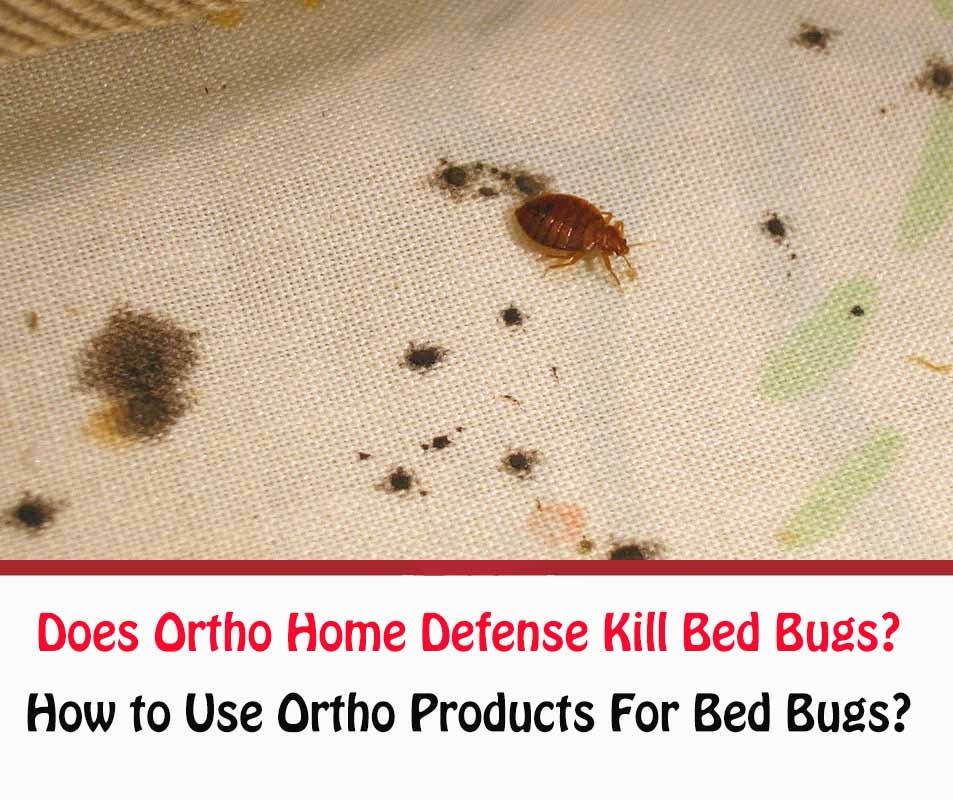 Does Ortho Home Defense Kill Bed Bugs?