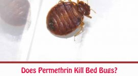 Does Permethrin Kill Bed Bugs?