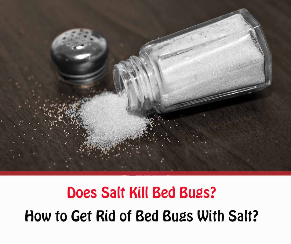 Does Salt Kill Bed Bugs?