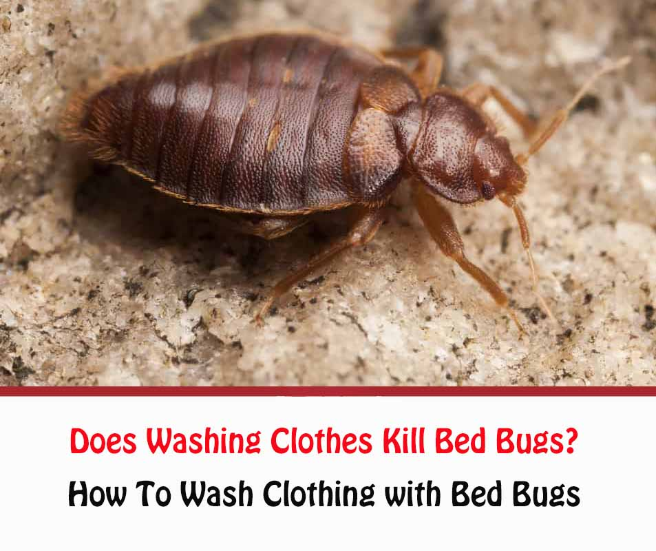 Does Washing Clothes Kill Bed Bugs?