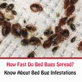How Fast Do Bed Bugs Spread?