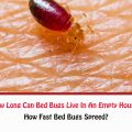How Long Can Bed Bugs Live In An Empty House