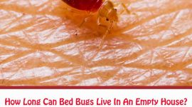How Long Can Bed Bugs Live In An Empty House?