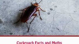 How Long Can Cockroaches Live In A Plastic Bag?