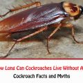 How Long Can Cockroaches Live Without Air