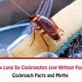 How Long Do Cockroaches Live Without Food?