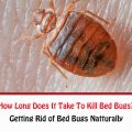 How Long Does It Take To Get Rid Of Bed Bugs