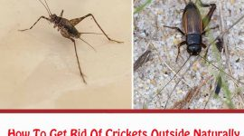 How To Get Rid Of Crickets Outside Naturally