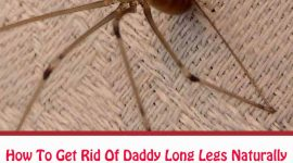 How To Get Rid Of Daddy Long Legs In Bathroom?