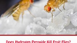 How To Get Rid Of Fruit Flies With Hydrogen Peroxide