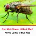 How To Get Rid Of Fruit Flies With White Vinegar