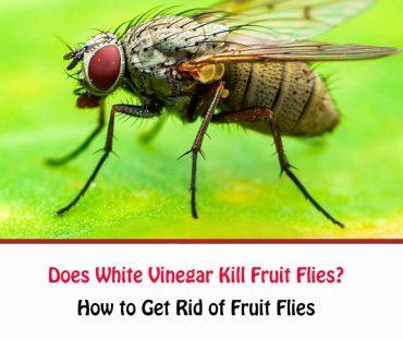 Flies Getridofallthings Com