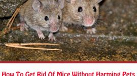 How To Get Rid Of Mice Without Harming Pets