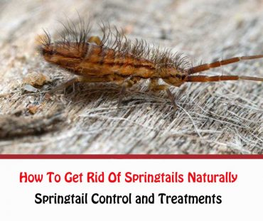 How To Get Rid Of Springtails Naturally