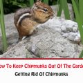 How To Keep Chipmunks Out Of The Garden