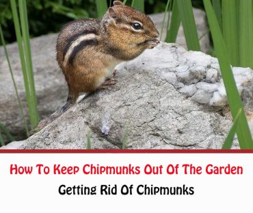 How To Keep Chipmunks Out Of The Garden?