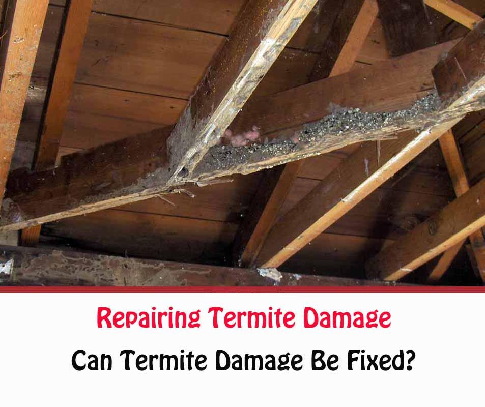How To Repair Termite Damage