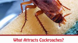 What Attracts Cockroaches?