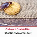 What Do Cockroaches Eat