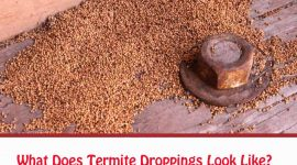 What Does Termite Droppings Look Like?