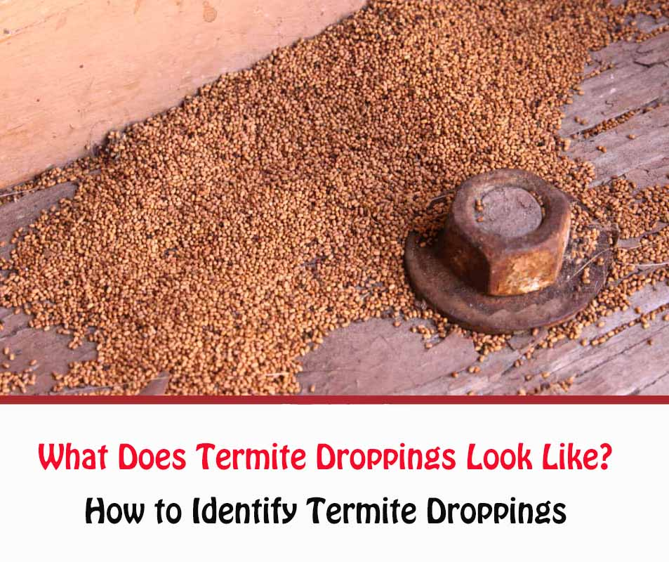 What Does Termite Droppings Look Like