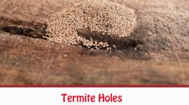 What Do Termite Holes Look Like?