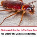 Are Shrimp and Cockroaches Related?