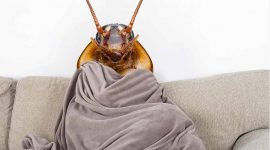 At What Temperature Do Roaches Die?