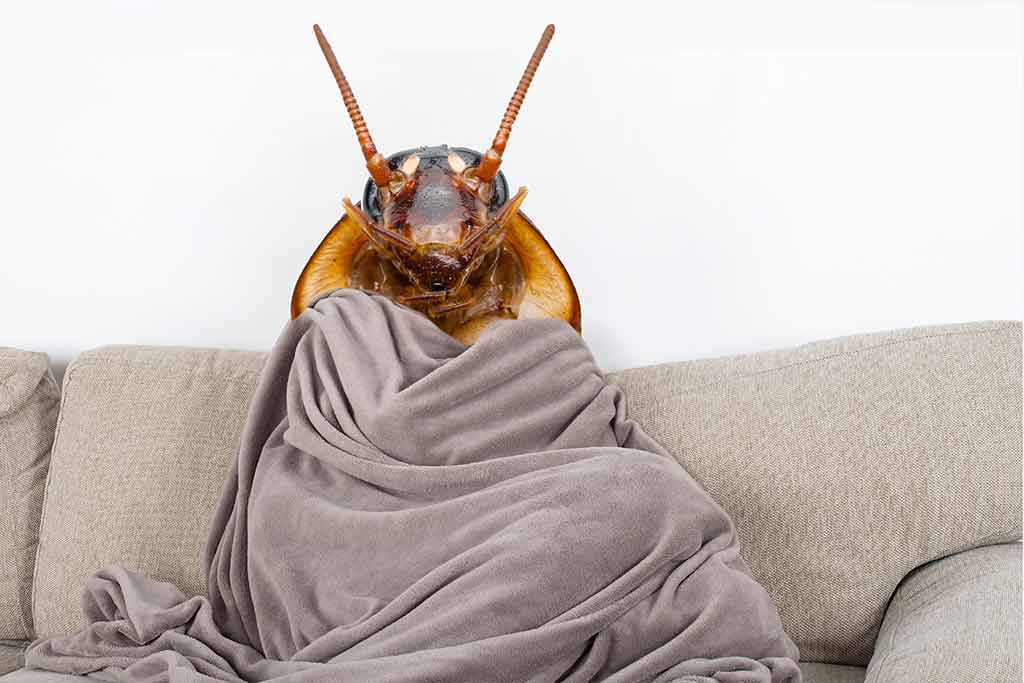 At What Temperature Do Roaches Die 2020 - Image By pestlockdown