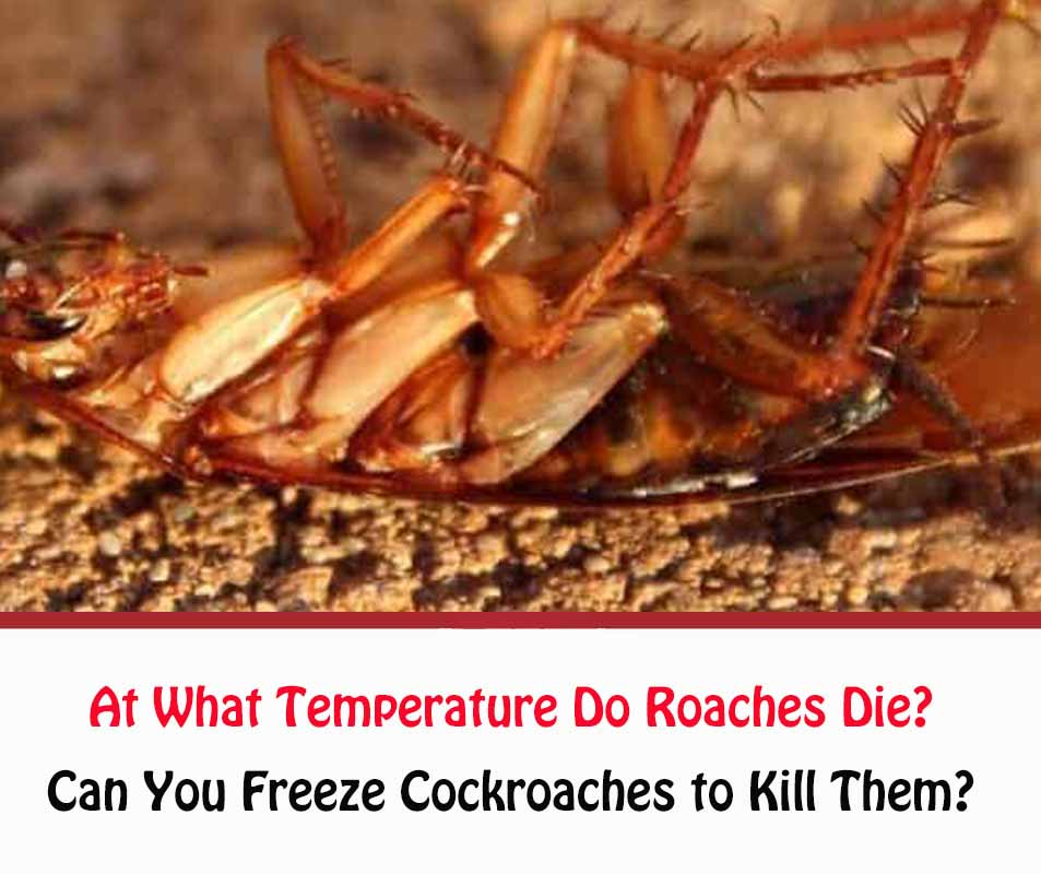 At What Temperature Do Roaches Die
