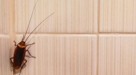 Can Cockroaches Climb?