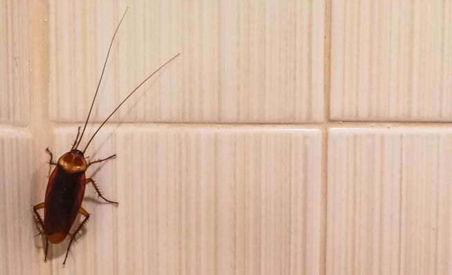 Can Cockroaches Climb on Wall - Image by Treehugger