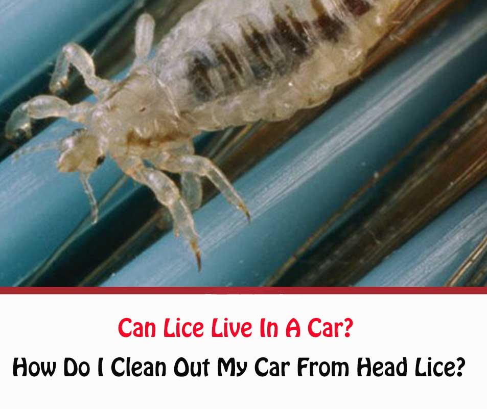Can Lice Live In A Car