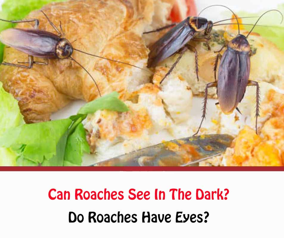Can Roaches See In The Dark?