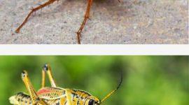 Cockroaches Vs. Crickets