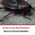 Do Bay Leaves Repel Roaches?