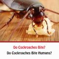 Do Cockroaches Bite Humans?