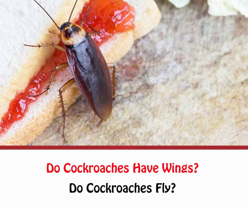 Do Cockroaches Have Wings?